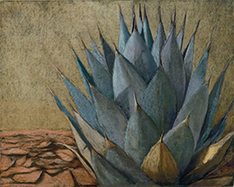 mexican-agave-260