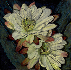 night-blooming-cereus-240