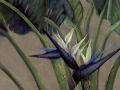white-bird-of-paradise-adj-230