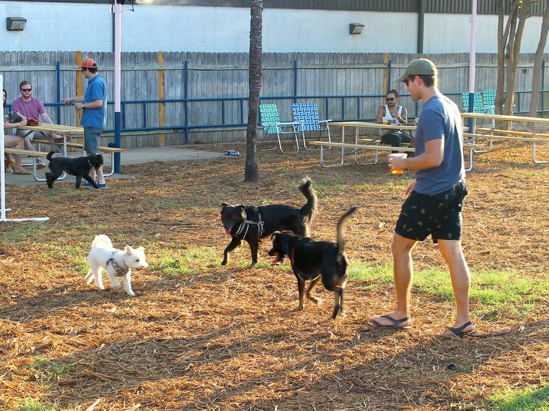 Dog Loving Yard Bar Opens For Canines And Humans